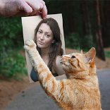 Effect Playful Cat