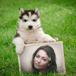 प्रभाव Puppy with Frame