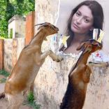 Effet Chèvres