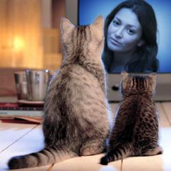 효과 두 마리의 고양이